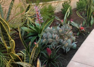 ISC- planter